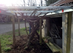 DIY Grape Arbor this one will last for years! http://HomemadeFoodJunkie.com
